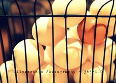 365 project #eggs