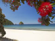 Pohutukawa Tree in Bloom and New Chums Beach, Coromandel Peninsula, North Island, New Zealand Photographic Print by David Wall North Island New Zealand, New Zealand Beach, Nz Art, Exotic Beaches, Kiwiana, Sunny Beach, The Beautiful Country, Places To Travel, Vacation Places