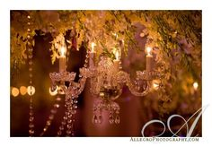 Miniature chandeliers complete the look for each centerpiece, surrounded by flowers and crystals.  Photographed by Allegro Photography.