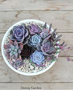 Trendy How To Make Succulent Arrangements Dish Garden Ideas Succulent Bowls, Succulent Centerpieces, Succulent Gardening, Succulent Arrangements, Succulent Terrarium, Terrarium Ideas, Terrarium Wedding, Colorful Succulents, Hanging Succulents