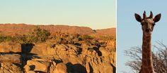 Imagen de http://thegoodholiday.com/wp-content/uploads/2015/01/Augrabies-Giraffe-Landscape.jpg.