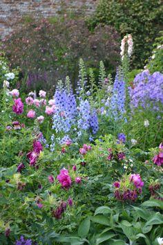 Roses and more… | SISSINGHURST GARDEN - Blue delphiniums