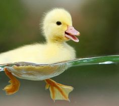 What a cool picture of an adorable duckling.