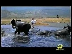 "BABY ELEPHANT WALK  ""Hatari!"" (USA-1962) I LOVE this piece of music.... fantastic to use in a Music for Film unit!"