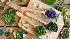 5 rostlin, které nejsou jen tak nějaký plevel! Znáte je? Spring Allergies, Peptic Ulcer, Zucchini Flowers, Types Of Roses, Veggie Patch, Wild Edibles, Stone Fruit, Squash Blossom, Herbs