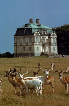 Deer Outside Eremitage Palace, Autumn in Denmark - Efterår i Danmark - National Geographic's Center for Sustainable Destinations