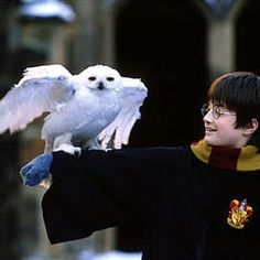 Harry and Hedwige