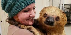Two Toed Sloth, Sloths, Winter Hats, Fashion, Moda, Fashion Styles, Fashion Illustrations, Lemur, Sloth