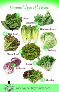 Don't Worry, Eat Happy: A List of Common Lettuce Varieties - Meals on Heels by Mindy Fruit Nutrition, Nutrition Chart, Health And Nutrition, Vegetable Nutrition, Vegetable Salad, Asian Vegetables, Fruits And Veggies, Types Of Lettuce, Eat Happy