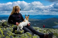 "Caroline Boje Mortensen az Instagramon: ""Casually chilling on the mountain, as one does in Norway! ⛰️🇧🇻👌 . . #gaustatoppen #jackrussell #norway #mountaindog #gaustablikk #hiking…"" Mountain Dogs, Chilling, Breeze, Norway, Mountains, Nature, Travel, Instagram, Viajes"