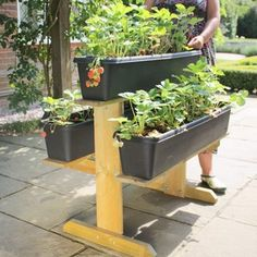 Strawberry Raised Growing Table - Garden Planters at Harrod Horticultural Wooden Garden Planters, Planter Pots, Garden Table, Container Gardening, Gardening Tips, Vegetable Garden Tips, Strawberry Garden, Flower Boxes, Raised Beds