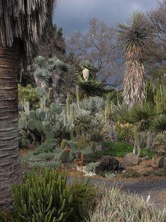 The Ruth Bancroft Garden, Walnut Creek, CA (form, assymetrical balance in photo, pads vs. Lake Garden, Dry Garden, California Garden, California Travel, Desert Botanical Garden, Botanical Gardens, Mediterranean Garden, Spanish Revival, Garden Spaces