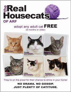10 Brilliant Cat Adoption Promos | ASPCA Professional