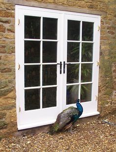 Bepsoke French Doors with parliment hinges by Merrin Joinery. With visiting peacock. French Windows, French Doors, Listed Building, Folding Doors, Patio Doors, Home Hacks, Double Doors, Wooden Doors, Cellar