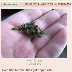 I paid 40 dollars for this did i get ripped off? Funny As Hell, Funny Me, Funny Stuff, Funny Gags, Funny Humour, Get Ripped, Laughing So Hard, How To Dry Basil, I Laughed
