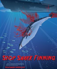 THAT IS THE KIND OF PICTURE I LIKE TO SEE! (Do anything to stop finning)STOP SHARK FINNING!