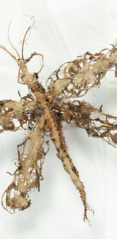 Anna Steiner.  plant material insect made from iris, willow bark and fine grass pulp.