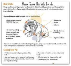 signs of heatstroke in dogs