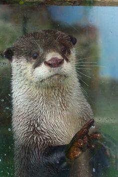 Awe otter