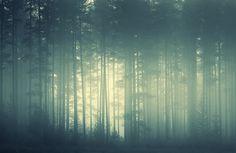 Harhakuva » Nitrok » Vihreä metsä