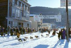 Aventura de Trineos de Perros | Guía Perros de trineo en Canadá | Viaja de México a Canadá