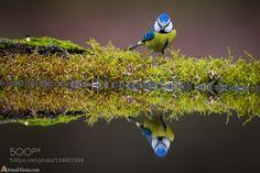 Mirror de AhmadAlessa