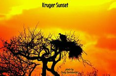 Kruger Sunset Sunset Photos, Skiing, Movies, Movie Posters, Art, Pictures, Ski, Art Background, Films