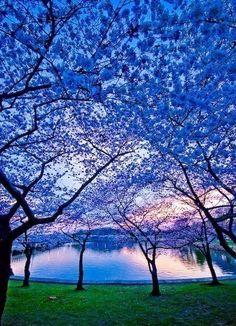 В мире есть места, красота которых незабываема и ни с чем несравнима! Япония одна из немногих стран - стала магнитом для миллионов гостей со всех концов света, которые приезжают иногда только затем, чтобы полюбоваться великолепным цветением весенних растений!    #счастье #весна #цветы  Все о детях и для детей! - www.baby-answer.ru  Методики раннего развития детей - http://baby-consultant.ru/