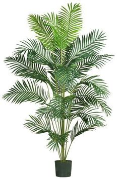 Nearly Natural 5261 Paradise Artificial Palm Tree, 7-Feet, Green by Nearly Natural -- Check out the image by visiting the link.