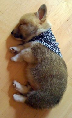 Long day out on the range.    #cute dog #funny dog #dog #cute animals #puppy #puppies #pooch #poochie #doggie # doggy # doggies #dogs #funny dogs #funny puppies #funny puppy
