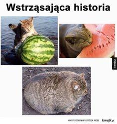 Funniest Cat Memes, Stupid Funny Memes, Funny Dogs, Funny Humor, Cute Animal Memes, Funny Animals, Cute Animals, Memes Ridículos, Silly Jokes
