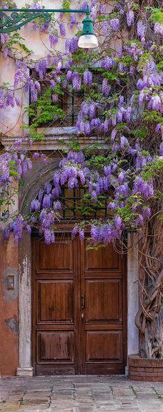 Beautiful Flowers Purple Favorite