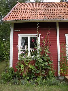Two of my favorite things--red Swedish cabins and hollyhocks! My goodness!!! So much love!