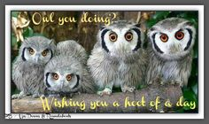 Owl you doing.  Wishing you a hoot of a day