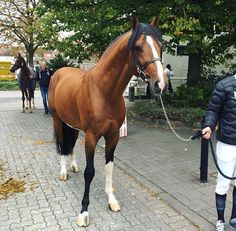 Mark Blumans horse Diesel - I want him! He's perfect!
