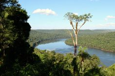 The Atlantic Forest in Misiones. South America