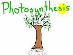 "Photosynthesis in plants - Lesson Animation  for Kids  www.MakeMeGenius.com has a bunch of science videos on all science areas, cool facts, educational power-points, jokes, science projects and general knowledge tests Just had to pin teh photosynthesis one for the ""image"""