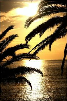 #Canary Island Date Palms #REalPalmTrees Sonnenuntergang von Wonderful Dream Picture - fertiges Wandbild, Bild auf Keilrahmen,