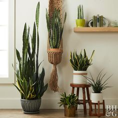 Add a Snake Plant to your indoor garden today. It is one of the easiest, low-maintenance houseplants to care for, and it makes a bold design statement in any room. Plantes Feng Shui, Easy Care Houseplants, Indoor Plants Low Light, Indoor Plant Wall, Outdoor Plants, Tall Indoor Plants, Outdoor Gardens, Plantas Indoor, Dekoration