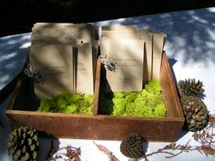 Forest Themed Programs | Amphitheatre of the Redwoods | Wedding and Events Venue | Santa Cruz, CA