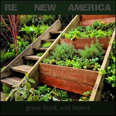 Grow Food not Lawns « People Excited About Co~Existence