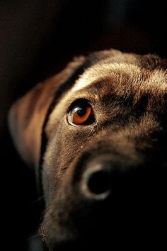 Close up of humans' best friend