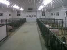 show cattle barns   ... to stop by and see the new Guyer Pig barn. It is pretty impressive