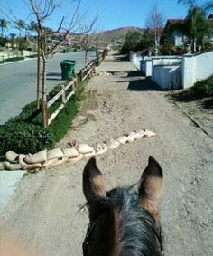 """Norco, California. """"Horse Town, USA"""", where they have equestrian trails instead of sidewalks and hitching posts in front of the stores."""