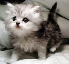 導讀:貓咪都不喜歡碰水,如果送愛貓到寵物店洗澡,除了主人需要花錢以外,如果貓咪怕生,可能會被店家麻醉進行洗澡。基於安全與省錢的理由,本文教大家如何讓貓貓乖乖洗澡,以下文章養貓的你一起來了解。