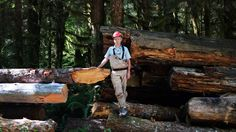 The Freshwater Trust is felling trees to repair the damaged Sandy River ecosystem and revive endangered native species.