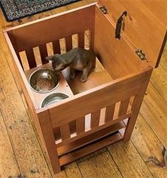 dog proof cat feeding station. NEED THIS