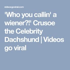 'Who you callin' a wiener?!' Crusoe the Celebrity Dachshund | Videos go viral