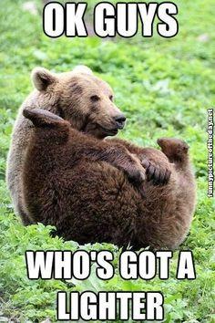 Ok Guys Whos Got A Lighter Funny Bear Flaming Farts