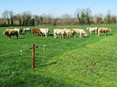 A rotational grazing system will help maximise grass growth.